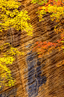 Wall of Gold, Red River Gorge, KY