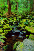 Stream / Sol Duc Area, Olympic National Park, WA